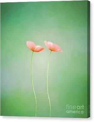 Wildflower Duet Canvas Print