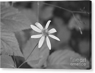 Canvas Print featuring the photograph Wildflower by Eric Liller