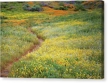 Canvas Print featuring the photograph Wildflower Field Near Diamond Lake In California by Jetson Nguyen