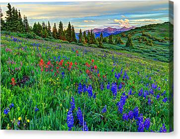 Fort Collins Canvas Print - Wildflower Hill by Scott Mahon