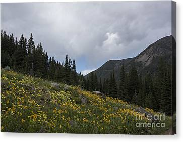 Wildflower Hillsides Canvas Print by Carolyn Brown
