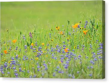 Wildflower Impressions Canvas Print by Kathy Yates