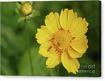 Canvas Print - Wildflower In Minnesota by Natural Focal Point Photography