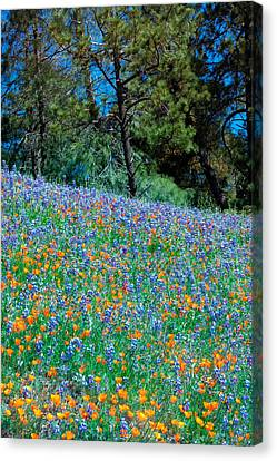 Canvas Print featuring the photograph Wildflower Meadow - Figueroa Mountains California by Ram Vasudev