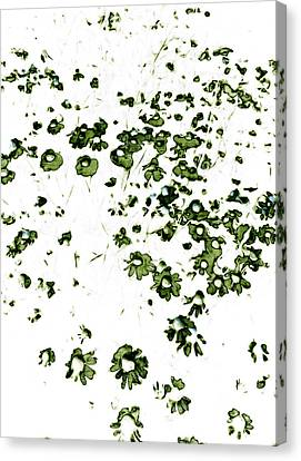 Wildflower Meadow Canvas Print by Frank Tschakert