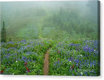 Wildflower Meadow Trail Canvas Print by Mike Dawson