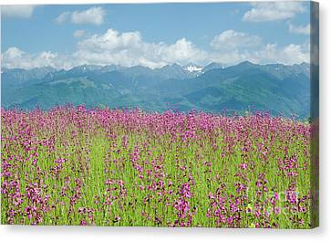 Wildflower Meadows And The Carpathian Mountains, Romania Canvas Print