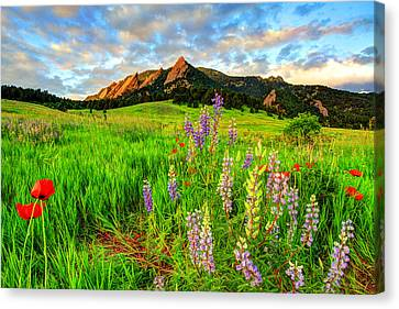 Fort Collins Canvas Print - Wildflower Mix by Scott Mahon