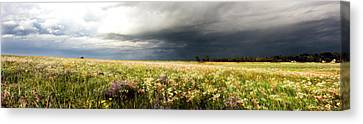 Wildflower Panorama 2008 Canvas Print by Eric Benjamin