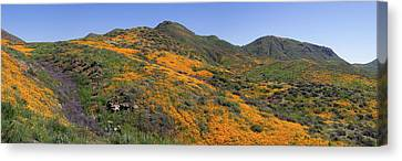 Canvas Print featuring the photograph Wildflower Panoramic by Cliff Wassmann