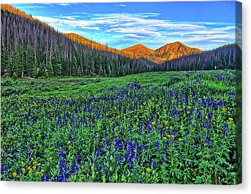Canvas Print featuring the photograph Wildflower Park by Scott Mahon