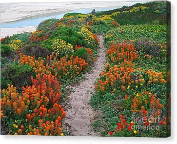 Wildflower Path At Ribera Beach Canvas Print