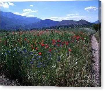 Wildflower Path Canvas Print by Judy Kirouac