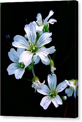Wildflower Canvas Print by Robert Knight
