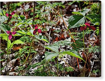 Wildflower Season Canvas Print