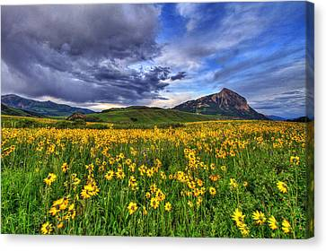 Wildflower Storm Canvas Print by Scott Mahon