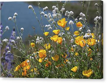 Canvas Print featuring the photograph Wildflower Super Bloom At Diamond Valley Lake by Cliff Wassmann
