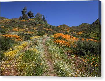 Canvas Print featuring the photograph Wildflower Superbloom by Cliff Wassmann