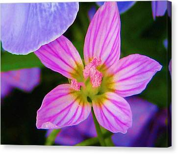 Canvas Print featuring the photograph Wildflower by Susan Carella