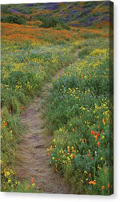 Canvas Print featuring the photograph Wildflower Trail At Diamond Lake In California by Jetson Nguyen