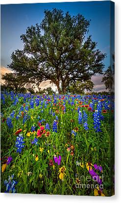 Wildflower Tree Canvas Print by Inge Johnsson