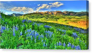 Wildflower Wonder Canvas Print
