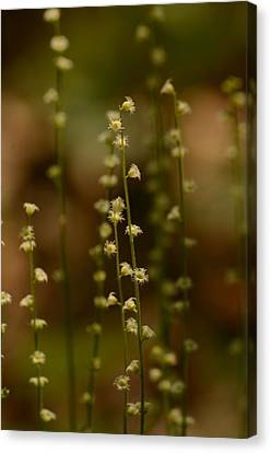 Wildflowers 1 Canvas Print by Maria Suhr