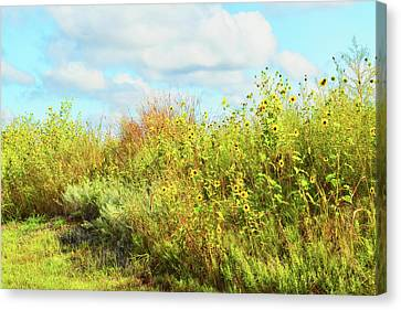 Wildflowers Along A Country Road  Photography  Canvas Print by Ann Powell