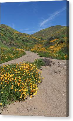 Canvas Print featuring the photograph Wildflowers Along Walker Canyone by Cliff Wassmann