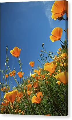 Canvas Print featuring the photograph Wildflowers And Blue Sky by Cliff Wassmann