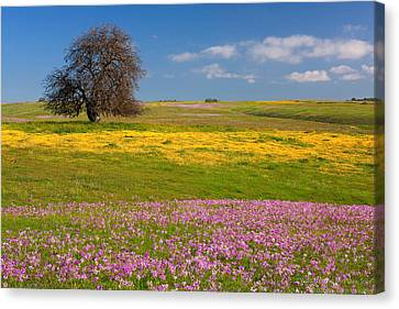 Canvas Print featuring the photograph Wildflowers And Oak Tree - Spring In Central California by Ram Vasudev