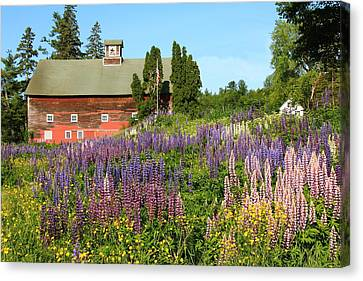 Canvas Print featuring the photograph Wildflowers And Red Barn by Roupen  Baker