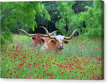 Wildflowers And Texas Longhorns 1 Canvas Print by Rob Greebon