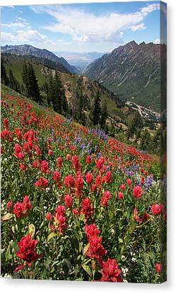 Wildflowers And View Down Canyon Canvas Print by Brett Pelletier