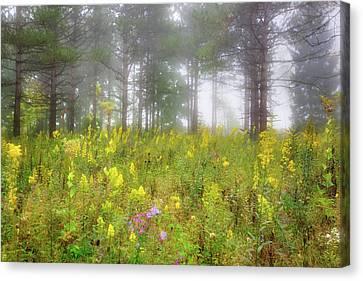 Wildflowers At Retzer Nature Center  Canvas Print by Jennifer Rondinelli Reilly