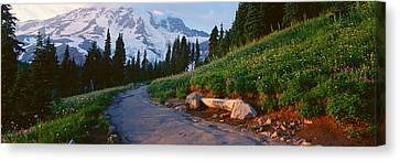 Wildflowers At Sunset, Mount Rainier Canvas Print by Panoramic Images