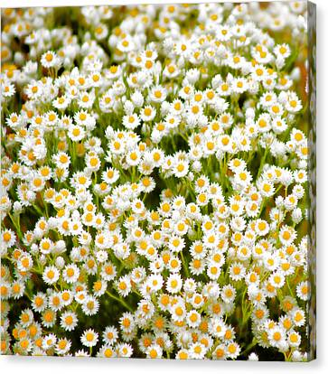 Canvas Print featuring the photograph Wildflowers by Holly Kempe