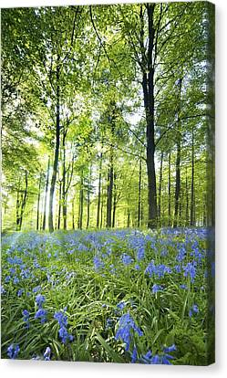 Wildflowers In A Forest Of Trees Canvas Print by John Short