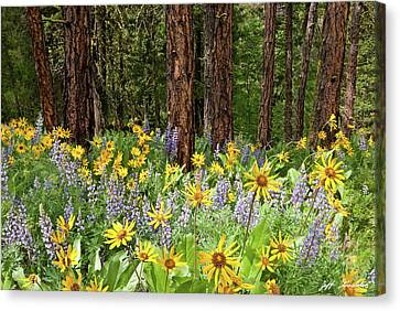 Balsamroot And Lupine In A Ponderosa Pine Forest Canvas Print