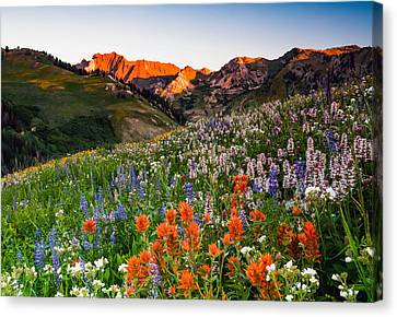 Wildflowers In Albion Basin. Canvas Print by Johnny Adolphson