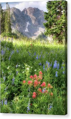 Wildflowers In Albion Basin Utah Canvas Print