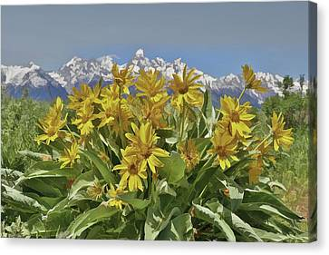 Wildflowers In Grand Teton National Park Canvas Print