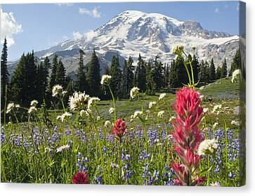 Snow-covered Landscape Canvas Print - Wildflowers In Mount Rainier National by Dan Sherwood