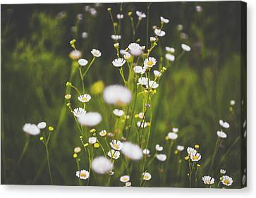 Canvas Print featuring the photograph Wildflowers In Summer by Shelby Young