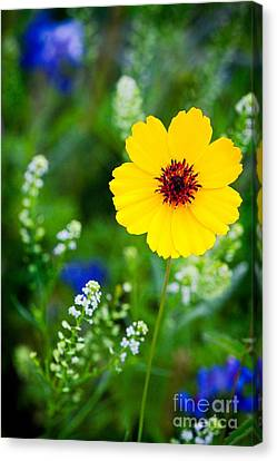 Wildflowers In The Hill Country Of Central Texas Canvas Print by Matt Suess