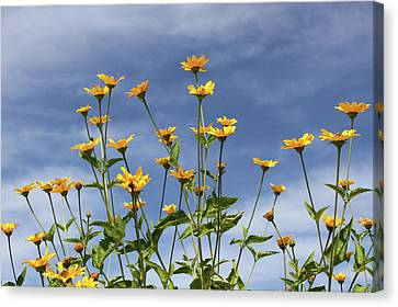 Wildflowers Canvas Print by Inspired Arts