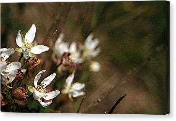 Canvas Print featuring the photograph Wildflowers by Marna Edwards Flavell