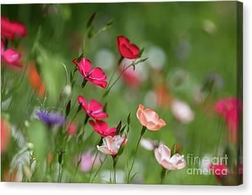 Wildflowers Meadow Canvas Print