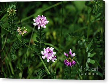Wildflowers Northford Canvas Print