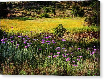 Wildflowers Of The Wichita Mountains Canvas Print by Tamyra Ayles